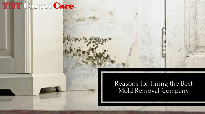 Reasons for Hiring the Best Mold Removal Company
