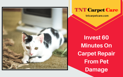 Invest 60 Minutes On Carpet Repair From Pet Damage