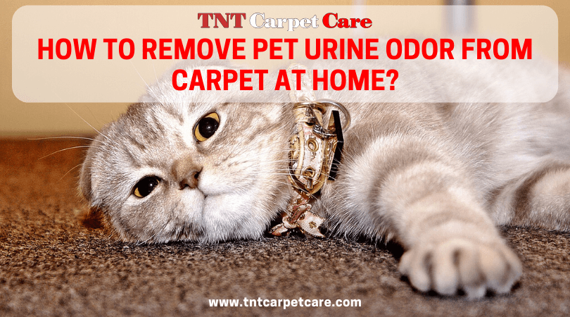 How to Remove Pet Urine Odor From Carpet At Home?