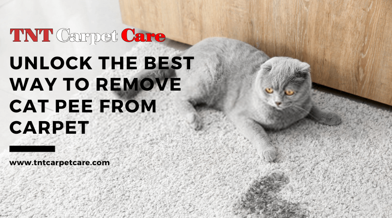 Unlock The Best Way To Remove Cat Pee From Carpet