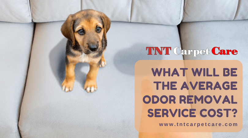 What Will Be The Average Odor Removal Service Cost