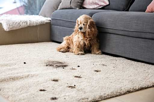 Important Pet Stain Smell Removal Tips