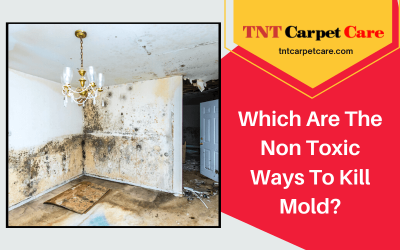 Which Are The Non Toxic Ways To Kill Mold?
